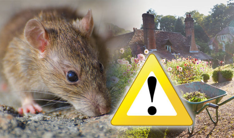 Pests and Rodents Can Affect Your Health